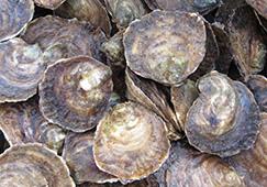 D'où proviennent nos huîtres ?